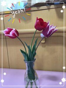 新潟の県花が沢山!