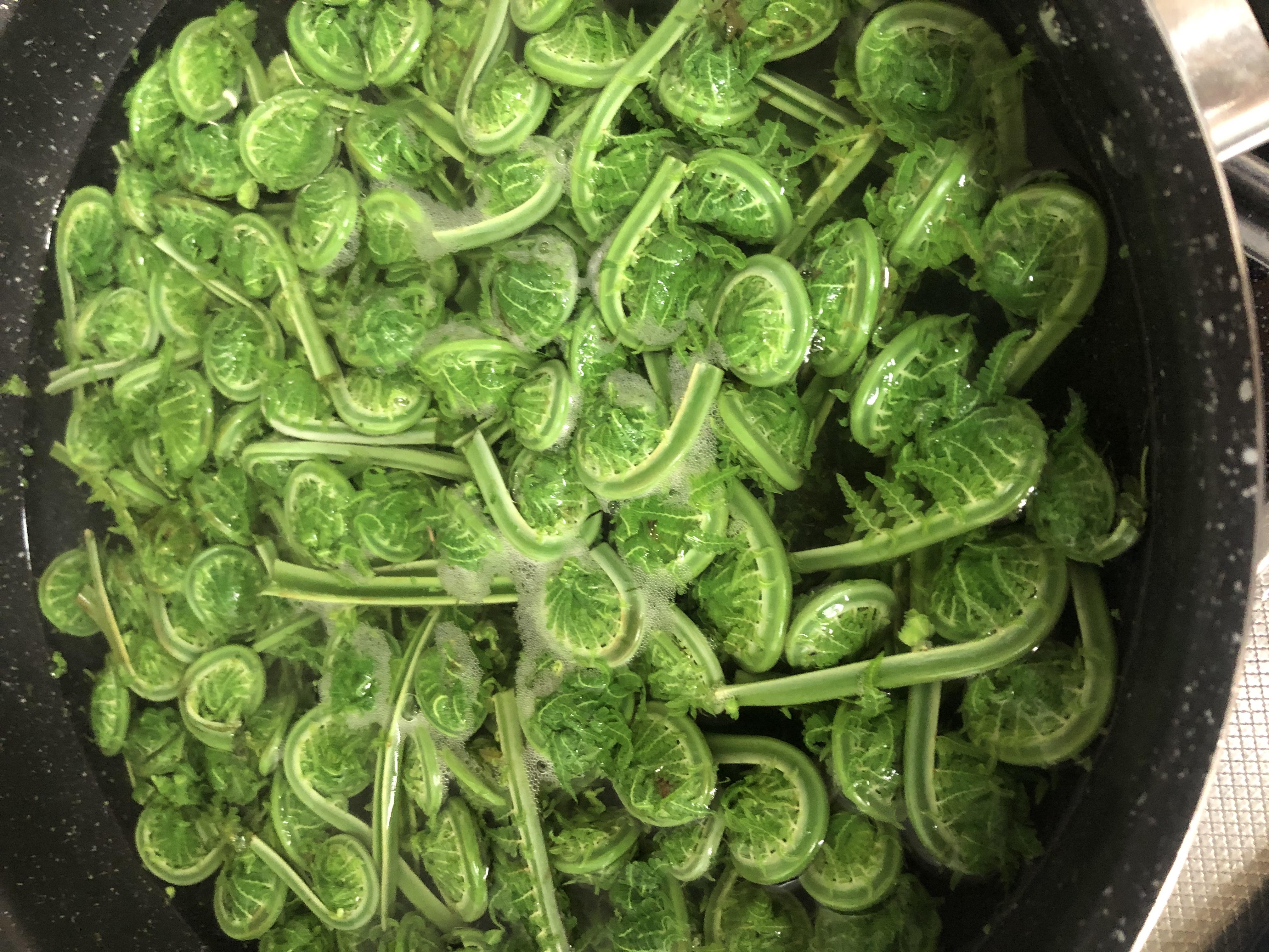 頂き物の山菜。
