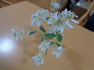 先日の花…